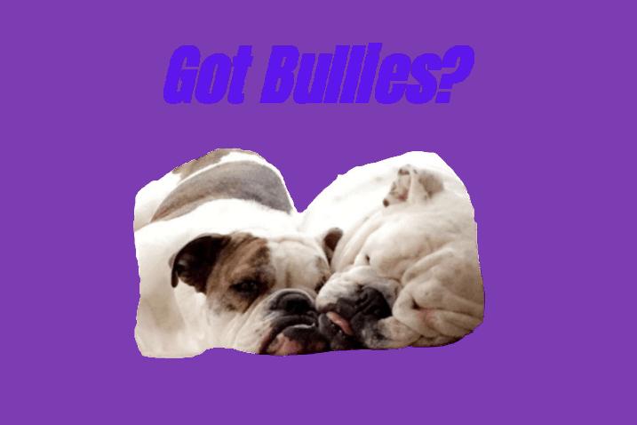 Got Bullies? English Bulldog Gear